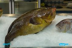 Καλημέρα!! Τι θα έλεγες για έναν Ροφό ;; #PsarasIxthiopolion #Ψάρια #Thessaloniki