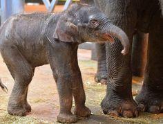 В Индии связали пижамы мерзнущим слонам