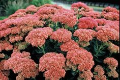 HILLEGOM - Wil je mooie planten in de tuin waar je ieder voorjaar veel plezier aan beleeft? Kies voor vaste planten. Deze zijn winterhard en komen dus ieder jaar weer terug of blijven zelfs groen in de winter. Er valt genoeg te kiezen. Maar voordat je op pad gaat om vaste planten uit te zoeken