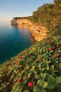 Bunchberries and Indianhead Point, Pictured Rocks National Lakeshore, Michigan