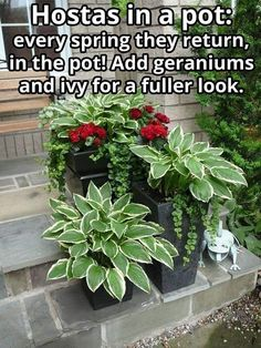Thrilling About Container Gardening Ideas. Amazing All About Container Gardening Ideas. Garden Yard Ideas, Garden Trees, Lawn And Garden, Garden Projects, Porch Garden, Garden Cottage, Easy Garden, Balcony Garden, Container Plants