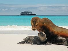 Calling all wildlife lovers: It's time to pack your bag for the Galápagos.