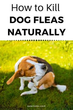 Natural Flea Killer, Natural Flea Remedies, All Types Of Dogs, Puppies Tips, Dog Varieties, Loyal Dogs, Flea Treatment, Dog Facts, Dog Care Tips