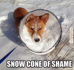 Dog memes snow cone of shame