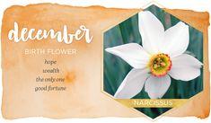 December Birth Flower Narcissus Flower Tattoos, Birth Flower Tattoos, Flower Tattoo Meanings, December Flower Tattoo, Birth Month Flowers, December Birth Flowers, List Of Flowers, December Birthday, Language Of Flowers