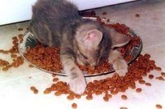 Breakfast in bed, kitten-style. -- WoofNWhinny*