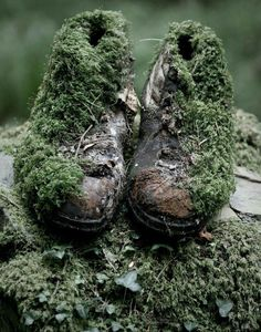 Abandoned walking boots reclaimed by nature (or just terrible athletes foot! Abandoned Buildings, Abandoned Places, Abandoned Castles, Haunted Places, Abandoned Mansions, Decay Art, Growth And Decay, Dame Nature, Post Apocalypse