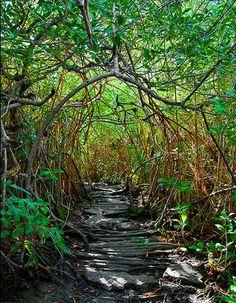 Xcacel beach cenote, Tulum/Akumal, Riviera Maya, Quintana Roo, Mexico
