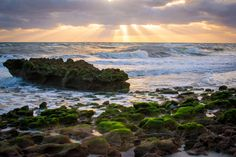 Sunrise at Coral Cove Park Florida. [OC][32262150] #reddit