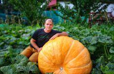 Termelői profil | Microker Pumpkin, Profile, Vegetables, User Profile, Pumpkins, Veggies, Vegetable Recipes, Squash