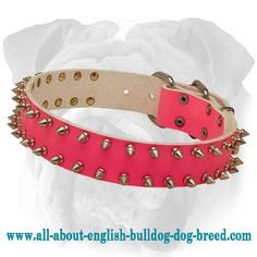 Top Quality Pink #English #Bulldog #Collar with 2 Rows of Spikes $49.90 | www.all-about-english-bulldog-dog-breed.com