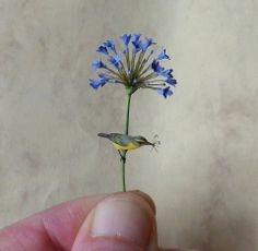by Beth Freeman-Kane, M.A.A. - Wildlife Miniaturist