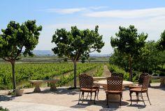 Jacuzzi Family Vineyards | Sonoma, CA www.eddie-hernandez.com