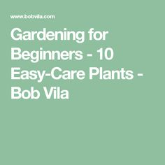 Gardening for Beginners - 10 Easy-Care Plants - Bob Vila