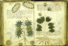 The Voynich manuscript is a work carbon-dated to the early 15th century (1404–1438), possibly from northern Italy. It is named after the book dealer Wilfrid Voynich, who purchased it in 1912. Some pages are missing, but there are about 240 vellum pages, most with illustrations. Much of the manuscript resembles herbal manuscripts of the 1500s. However, most of the plants do not match known species, and the manuscript's script and language remain unknown.