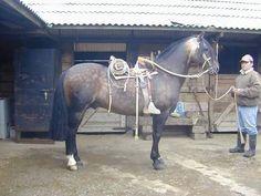 """Horse of Chile , caballo pura raza chilena .El Rincon """"Meli"""""""