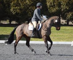 Tip of the Day: A Great Exercise For Getting More 'Sit' in the Canter.