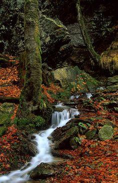 Unknown stream somewhere on Pohorje ( Nepoznan potoček na Pohorju)   Flickr - Photo Sharing!