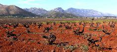 Paisatjes de la Vall de Pop. Fotografia de Guillem Ivars Costa