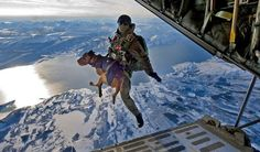 military dogs trained to parachute! Help us make this a Heart Shaped World! contact heartshapedworld@me.com