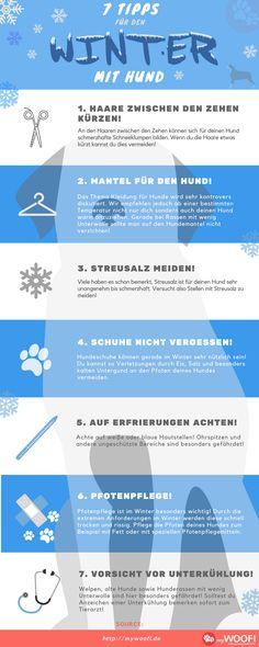 Infografik zu Hunden im Winter ❄️