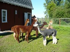 The Farm & Tour Information - E2's Emu Ranch Tours Individual and group tours available by appointment. E-mail us at e2semur@frontiernet.net or call 651-257-6664.