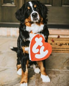 Does anyone know if there ever was a berner beanie baby?? @adatheberner