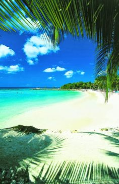 Aruba Island a Constituent County of the Kingdom of the Netherlands, Caribbean Islands Places Around The World, The Places Youll Go, Great Places, Places To See, Vacation Destinations, Dream Vacations, Vacation Spots, Aruba Honeymoon, Bahamas