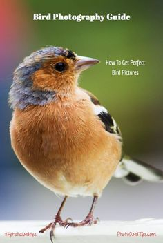 Bird Photography Guide: How to Get Perfect Bird Pictures – Bird Supplies Wildlife Photography Tips, Photography Basics, Photography Lessons, Photography For Beginners, Photography Tutorials, Love Photography, Animal Photography, Photography Business, Photography Settings