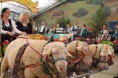 """""""Ein Stück Kultur unserer Region"""", nannte Ernst Siebert den Eichsfelder Bauernmarkt. Sonnabend und Sonntag hatten der größte Bauernmarkt und die Erzeugerbörs..."""