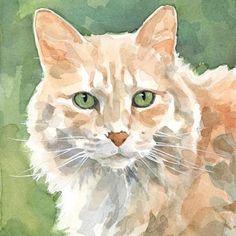 cat - David Scheirer