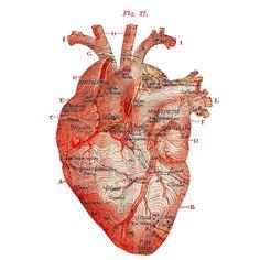 Heart Garrotxa