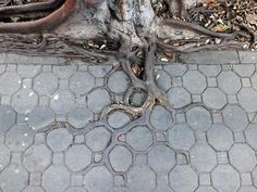 ROOTS IN THE CONCRETE JUNGLE - Pixdaus