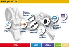 Audiología y logopedia en Barcelona