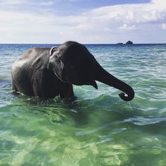 Guess who takes a bath in Thailand?