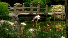 """""""— Tudo isso está bem dito... mas devemos cultivar nosso jardim.""""  Cândido, ou O Otimismo de Voltaire"""