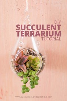 Learn how to make a succulent terrarium and how to keep it alive!