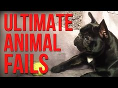 Humans aren't the only species that fail. Have a pet? You know what we're talking about. Enjoy the best animal and pet fails on the internet. Remember to sub...
