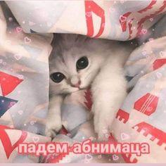 The Cat Grooming Brush - Sale! Cute Cat Memes, Cute Love Memes, Funny Memes, Russian Cat, Russian Memes, Animal Jokes, Funny Animals, Cute Animals, Love Pictures