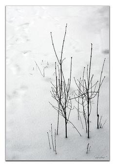 Suki Winter Wabi Sabi
