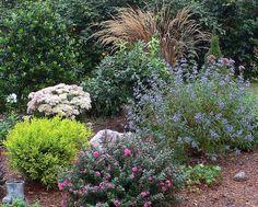 crape myrtle 'pocomoke' (dwarf) with blue mist shrub Front Walkway Landscaping, Landscaping Ideas, Japanese Plants, Plant Identification, Landscape Plans, Shrubs, Perennials, Mists, Rain