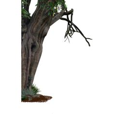 creepy_old_tree_side_png___by_alz_stock-d6mvsg4.png ❤ liked on Polyvore featuring trees