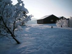 Kielder in the snow