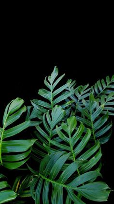 Aesthetic Iphone Wallpaper, Nature Wallpaper, Aesthetic Wallpapers, Green Leaves, Plant Leaves, Pictures Of Leaves, Brighton Photography, Leaf Photography, Leaf Texture