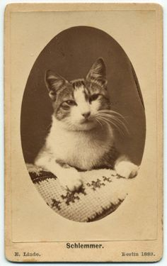 ca. 1883, [carte de visite portrait of a cat with needlework], Schlemmer  via the KaurmaNelson Vintage Photograph Gallery (I am not the only one)