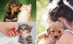 Prrrrfect news for kitten lovers! Cuddling cats reduces stress levels