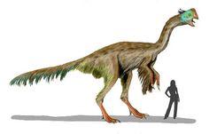Gigantoraptor.