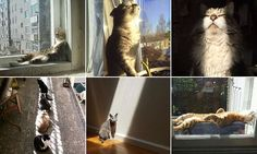 Bored Panda has compiled an adorable gallery of snaps of cats desperate to feel the heat on their fur - all shared online by animal lovers. It shows felines love a nap in the sun.