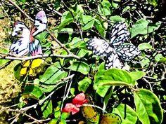 Tutorial: Coloridas Mariposas Recicladas - YouTube