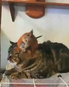 😍 cute baby animals, cute funny animals, animals and pets, Cute Funny Animals, Cute Baby Animals, Animals And Pets, Cute Cats, Funny Cats, Funny Squirrel, Wild Animals, Funny Humor, Cute Animal Videos